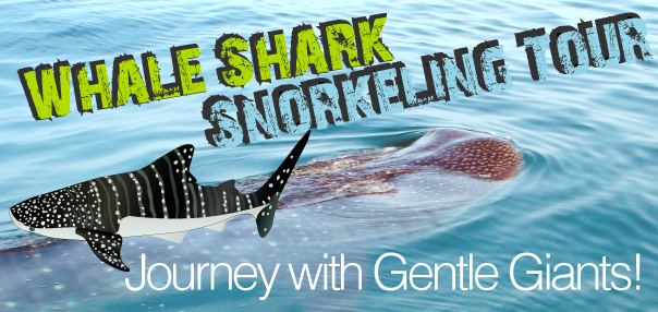 snorkeling journey with gently giants
